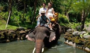 Sewa Mobil Di Bali - Bali Zoo Elephant Expedition