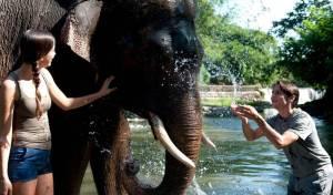 Sewa Mobil Di Bali - Bali Zoo Elphant River