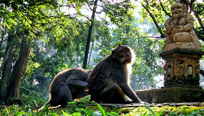 Monkey Forest Ubud Bali Feature