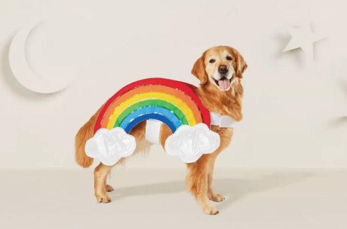 dog in rainbow costume