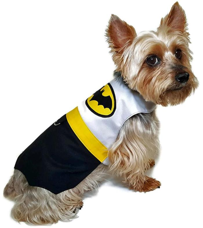 small dog with batman costume on