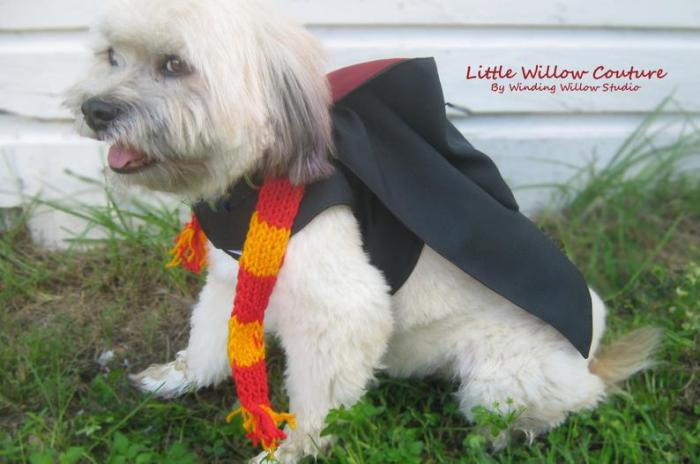 small dog in Harry Potter cape costume