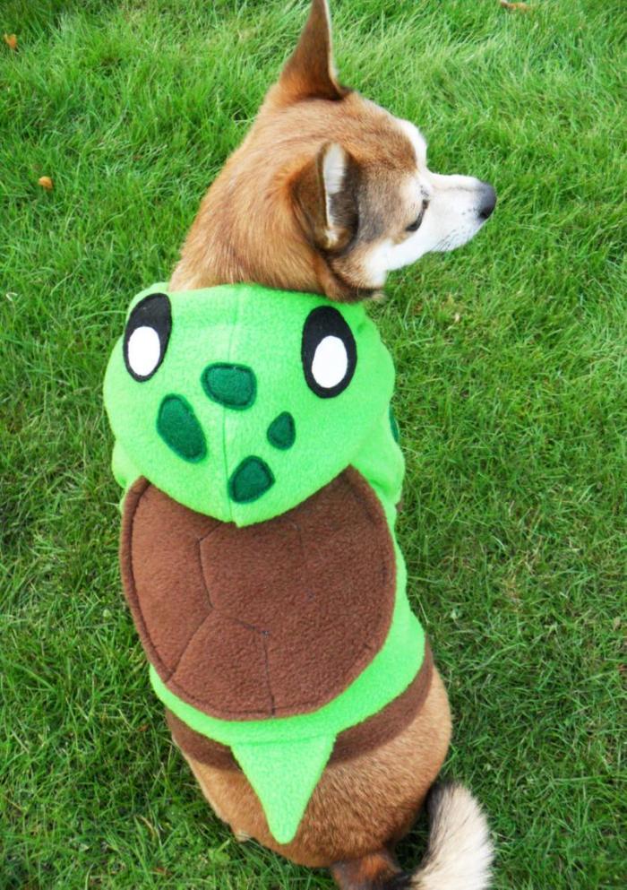 small dog in fleece turtle hoodie