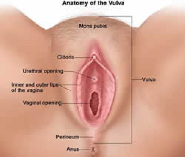 The Female Exterior Sexual Organs