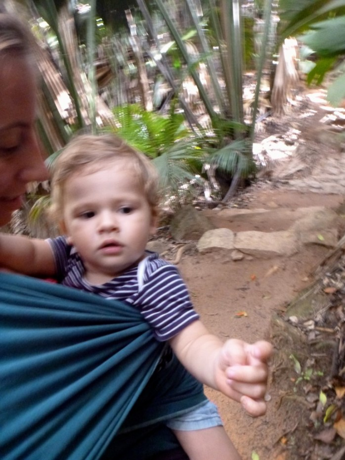 Toddler wearing in the Vallee de Mai