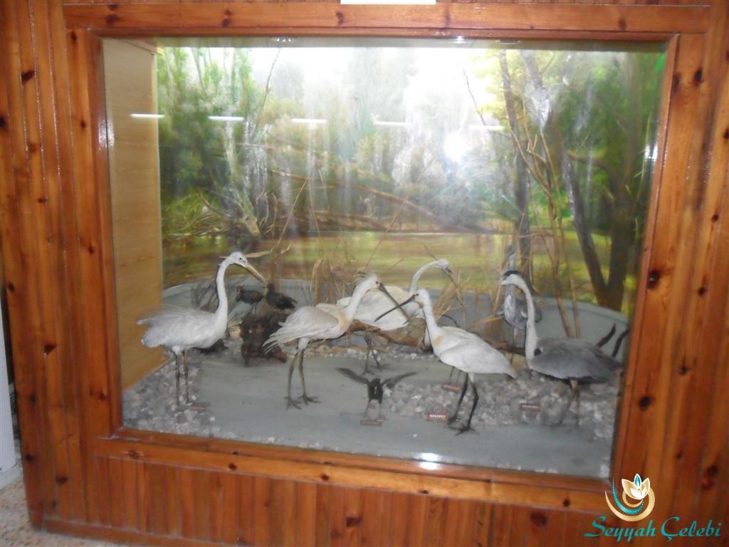Kuşcenneti Müze Leylekler