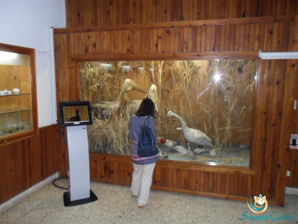 Kuşcenneti Müze Pelikan