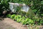 garten 150x100 Menschenkunde: Der Gärtner