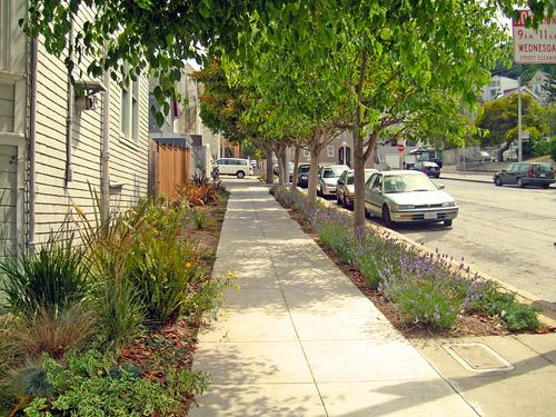 sidewalk garden Sidewalk Landscaping   SF Better Streets