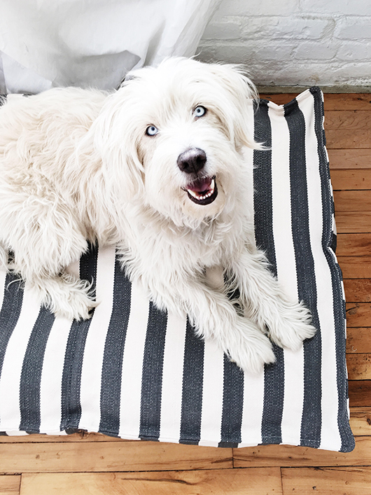 black and white striped dog bed / sfgirlbybay