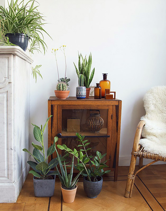 indoor plants in assorted jars / sfgirlbybay
