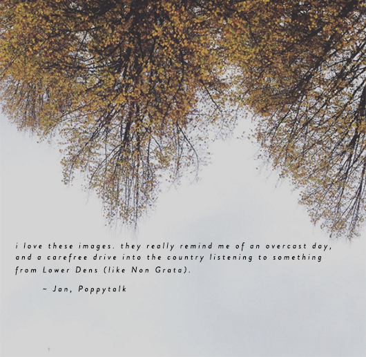 quote and autumn tree image jan of poppytalk / sfgirlbybay