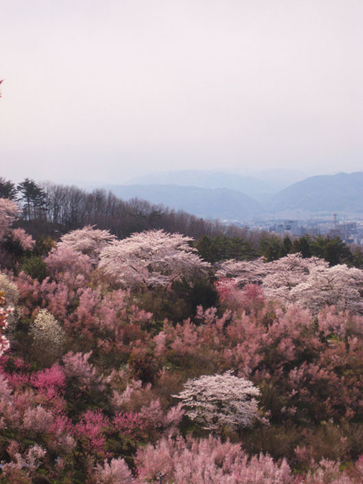 Hanami Yama Park in Fukushima city in bloom via skeletales / sfgirlbybay