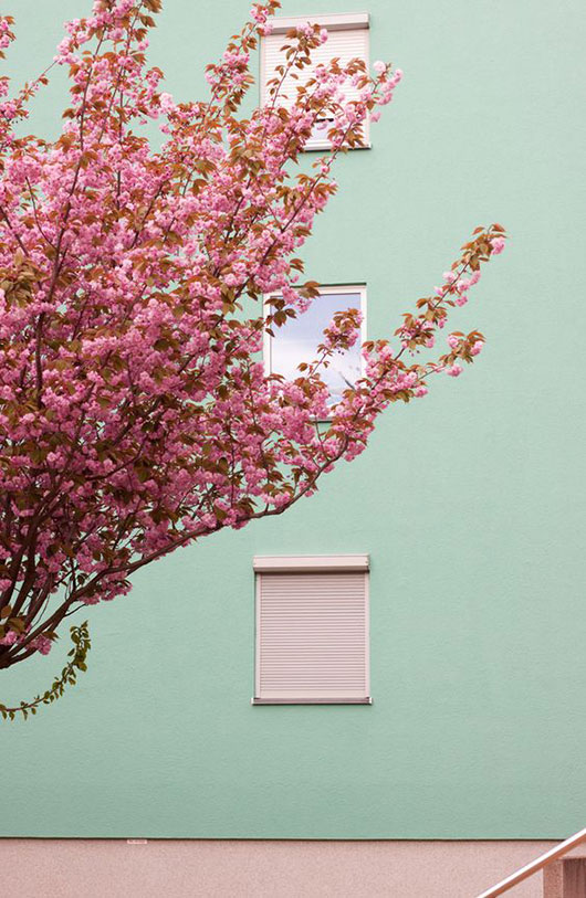 pale green wall with pink florals / sfgirlbybay