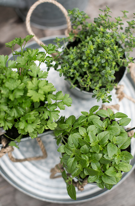 target drink tray with potted herbs growing / sfgirlbybay