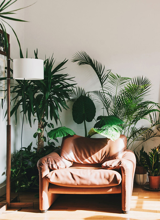 green plants and leather chair in barcelona home / sfgirlbybay