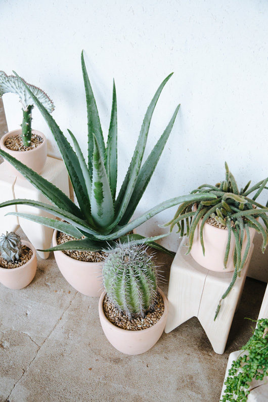 potted houseplants / sfgirlbybay