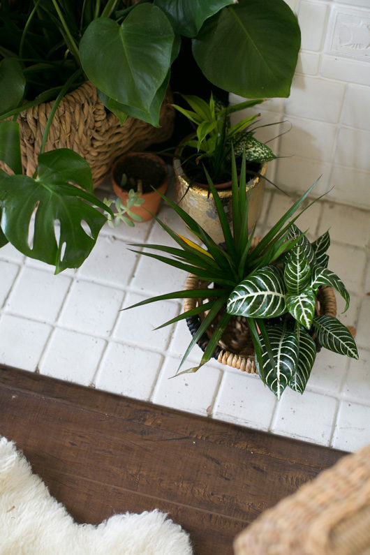 houseplants in woven baskets and ceramic pots / sfgirlbybay