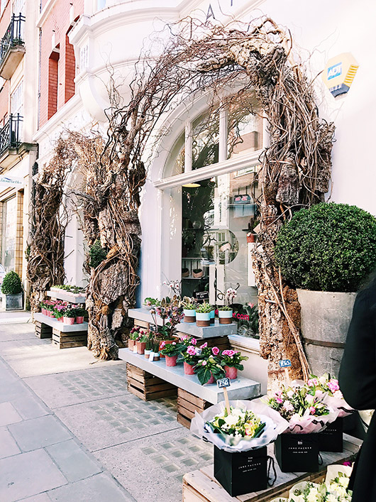 vines growing over european flower shop. / sfgirlbybay