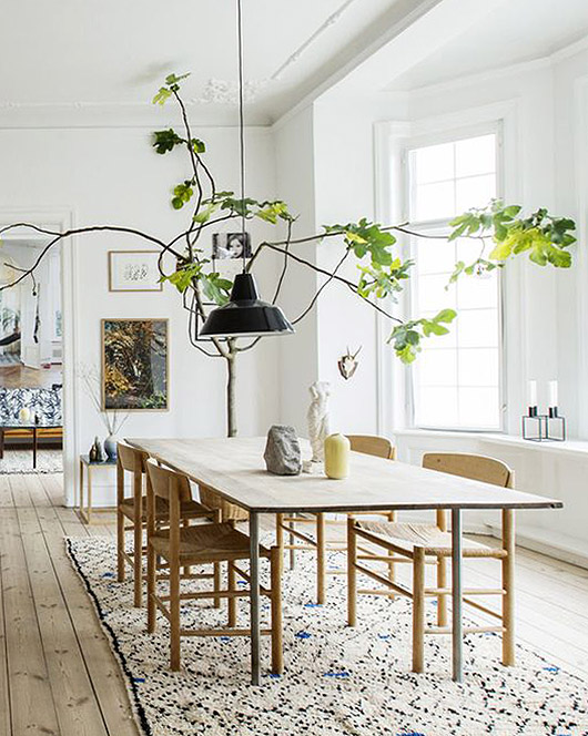 fiddle leaf fig tree in dining room. / sfgirlbybay