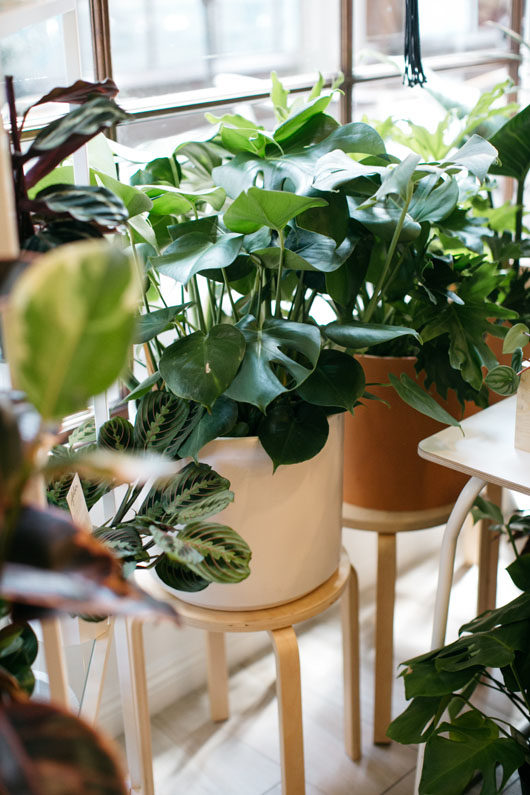 plants on stands for sale at folia. / sfgirlbybay