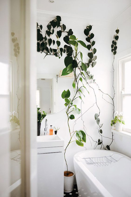 whitewashed bathroom with green vine growing up wall. / sfgirlbybay