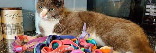Gatto torna a casa con occhialini da nuoto: sconosciuta la provenienza