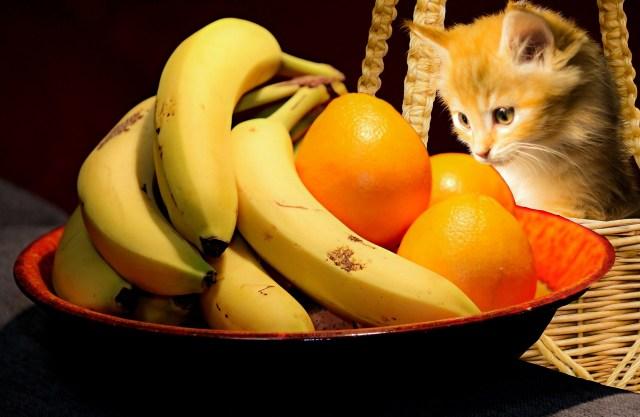 3 cibi tossici per il gatto