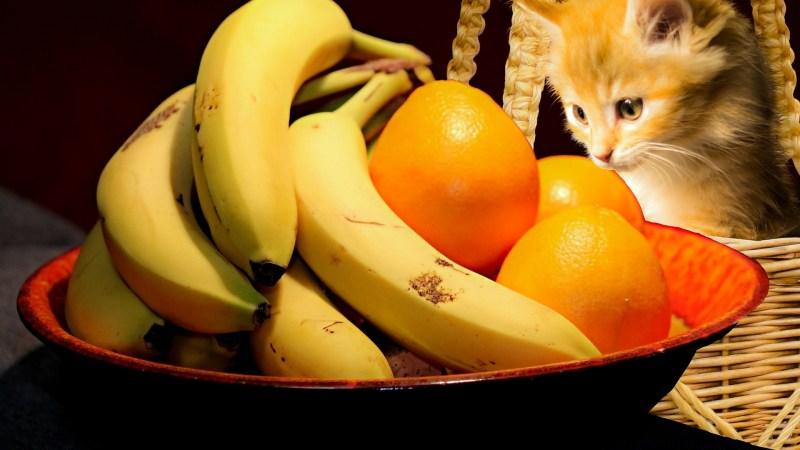 3 cibi tossici per il gatto: attenzione alla frutta