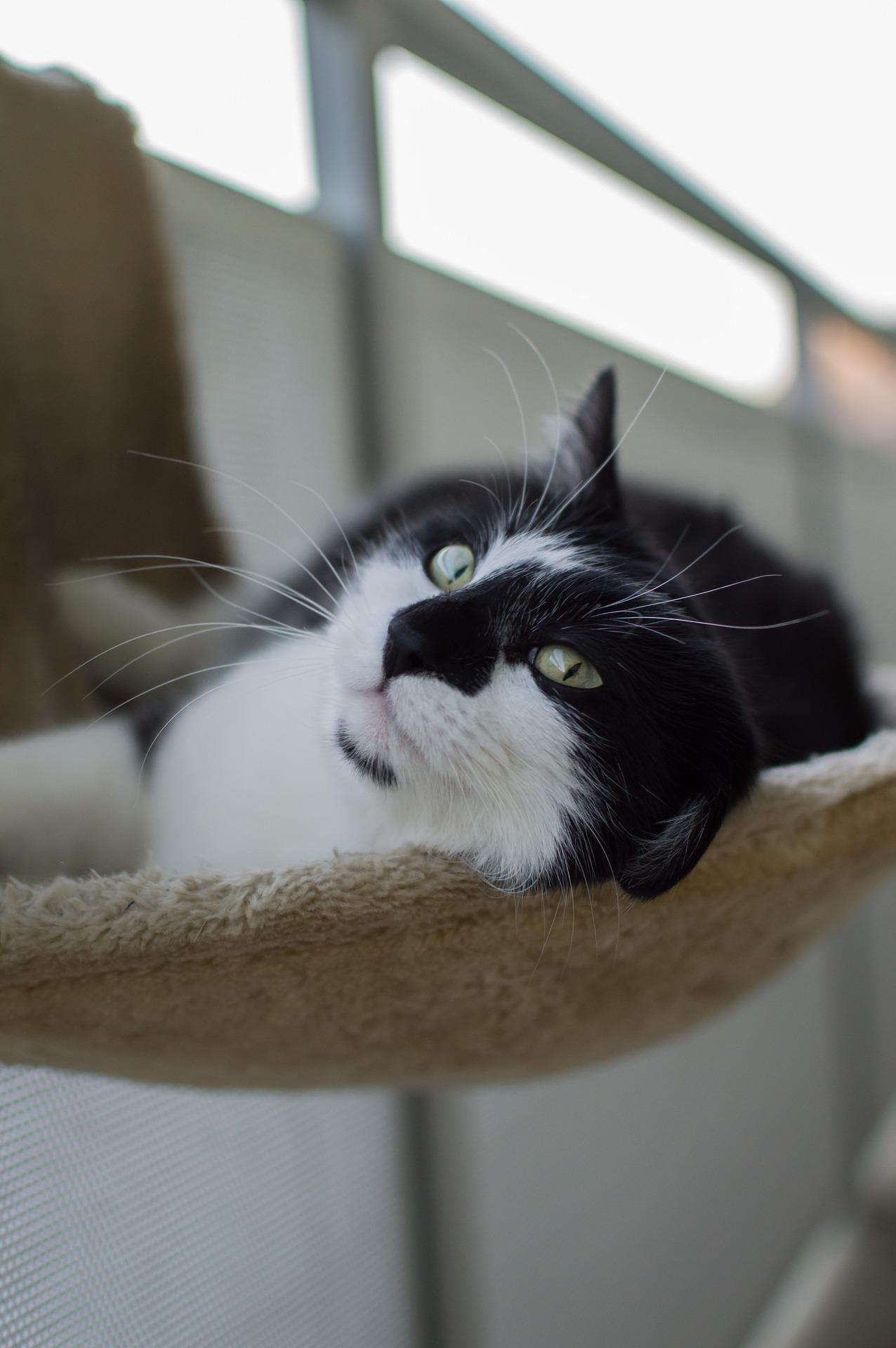 come fare foto perfette al gatto