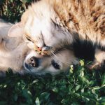 cani e gatti mangiano le stesse cose