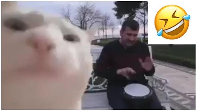 gatto che balla col tamburo