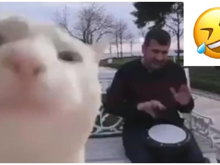 Gatto che balla col tamburo: origine del meme [Video]