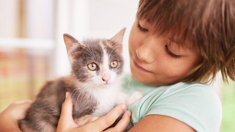 La bambina parla col gatto e il papà la filma [Video]