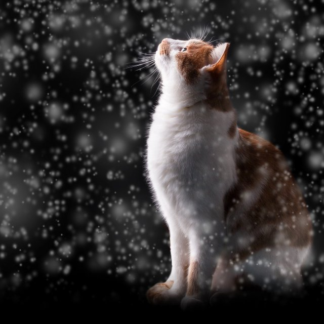 proteggere i gatti dal freddo