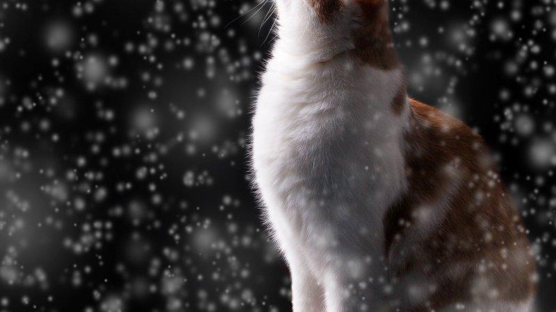Proteggere i gatti dal freddo: consigli utili
