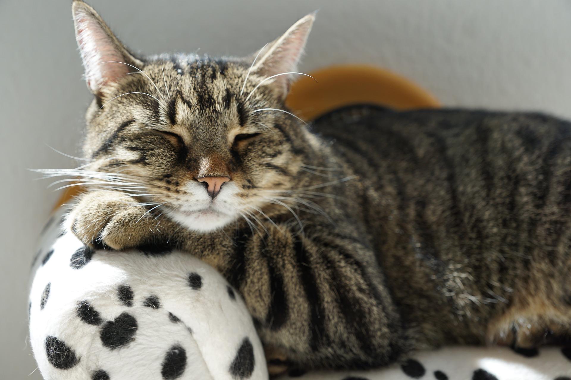 Festa Nazionale del Gatto: le origini e gli amici dei social