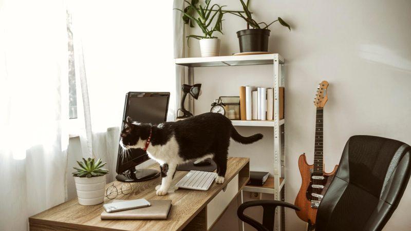 5 oggetti pericolosi da non avere in casa se hai un gatto