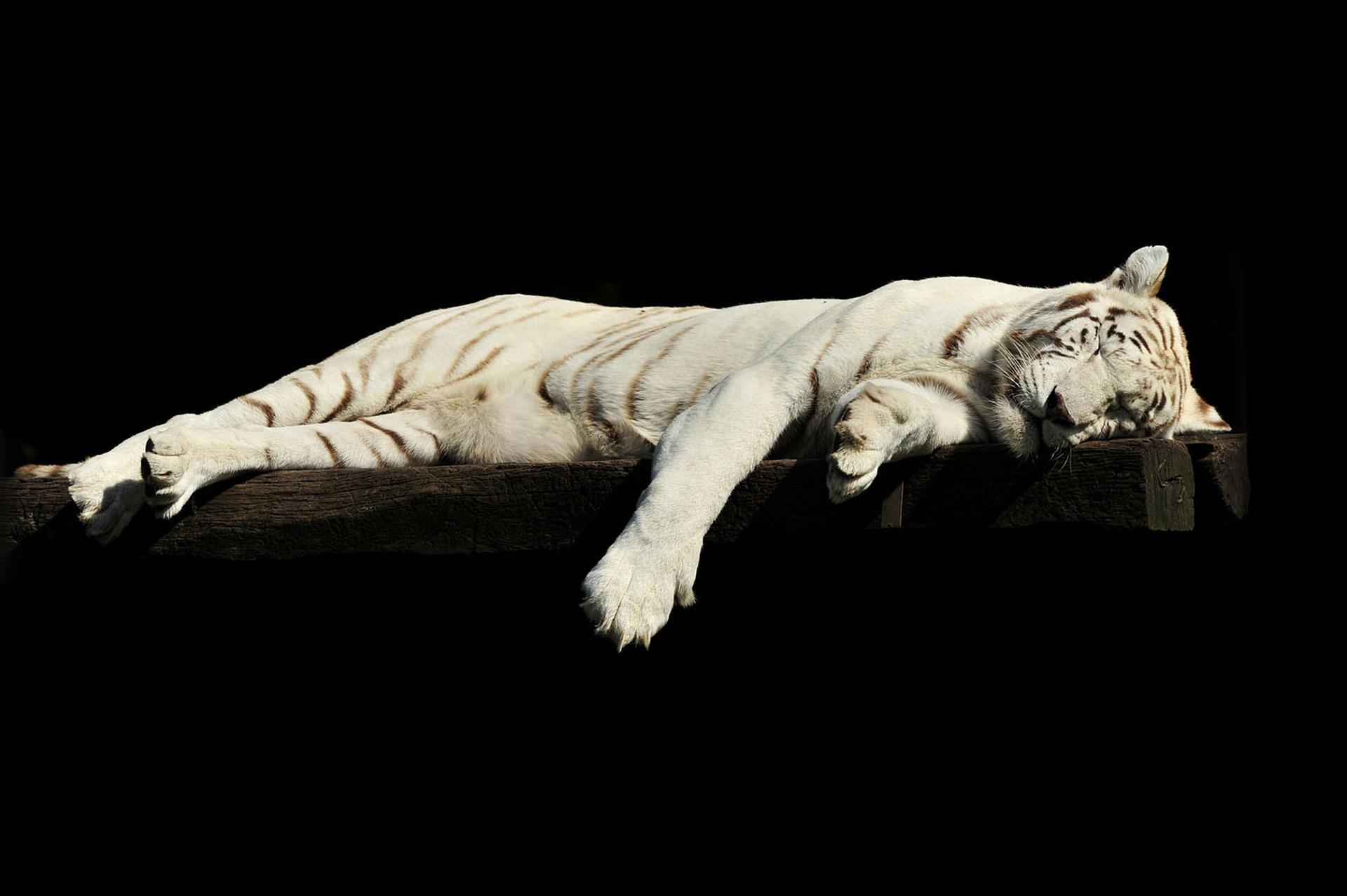 Animali che dormono più ore: il gatto non è tra i primi