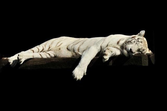 Animali che dormono più ore