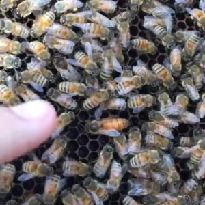 Kevin Mills' bees
