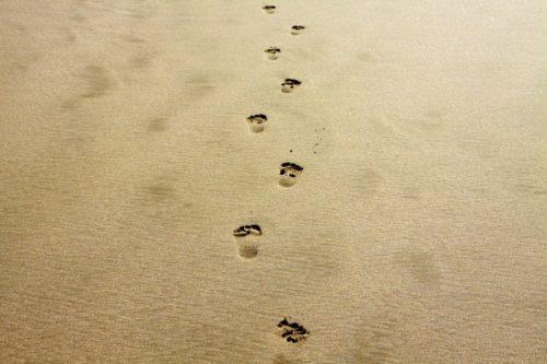 Step by Step by Joan Walker