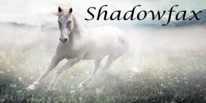 Shadowfax portrait - white horse in a sparkling field