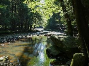 Sun dappled pool along the rock strewn creek