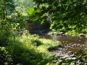 Sun sparkled creek framed by summer leaves