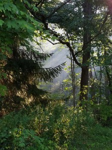 Light streaming through the forest illuminating early morning fog.