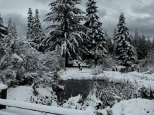 Snowy morning!