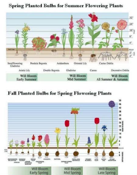 flower_garden_planting_timeline