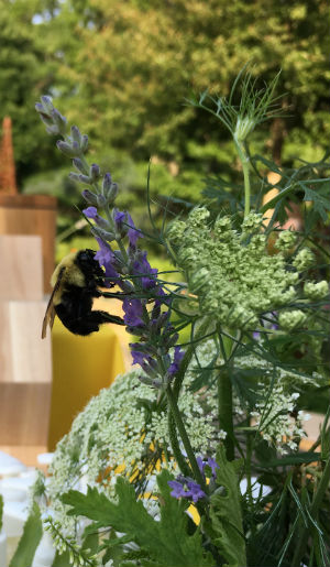 bumblebee_lavender_pollinator