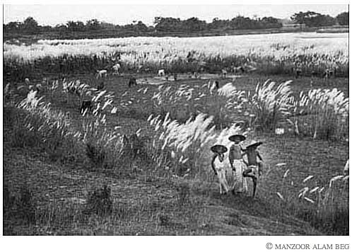 Cowboy by Manzoor Alam Beg